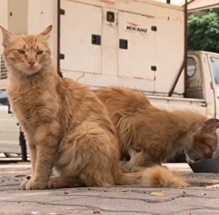 叙利亚流浪猫喂食器