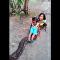 实拍印度女孩骑巨蟒 (视频)