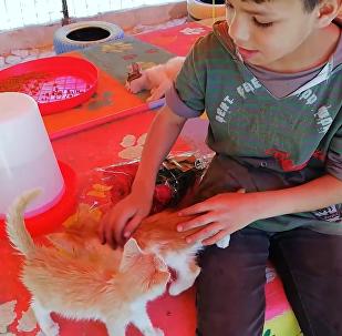 志愿者们在叙利亚拯救小猫