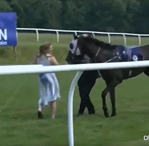 英國女記者在直播中赤手攔馬