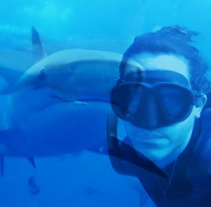潛水者拍下與鯊魚同遊畫面
