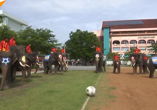 泰國大象踢足球