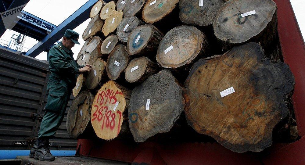 俄滨海边疆区启动木材交易所电子平台
