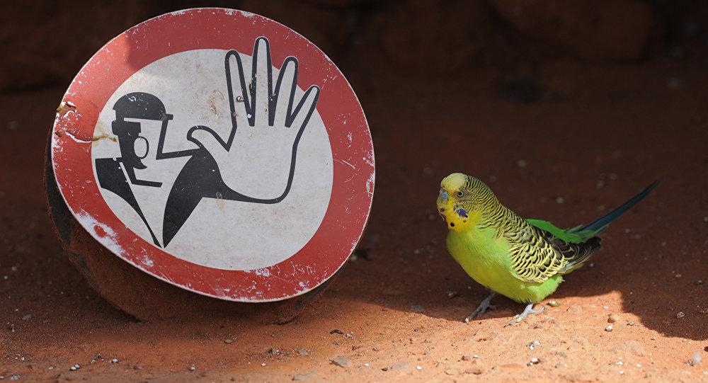 入狱的鹦鹉被归还给主人