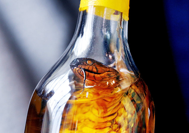 中国女子网购毒蛇欲制蛇酒  结果被蛇咬后中毒昏迷