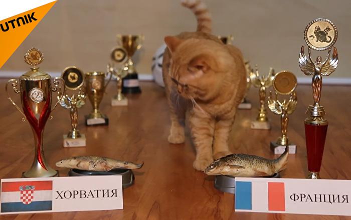看猫咪如何预言世界杯决赛