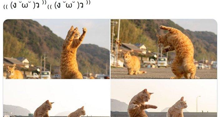 """日本摄影师镜头下的""""功夫猫咪"""""""