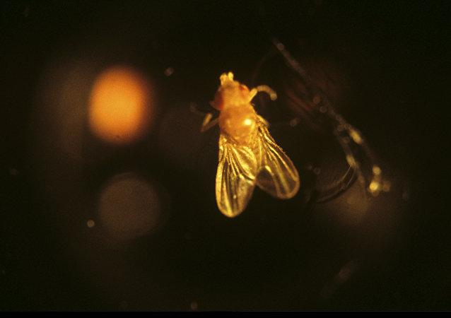 科学家发现一种能把昆虫变僵尸的真菌