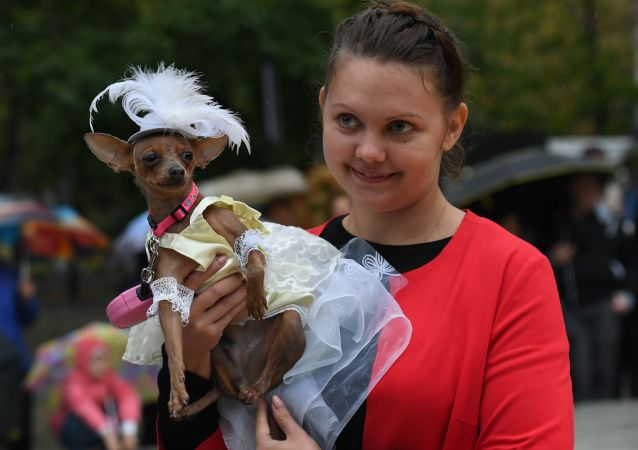 兽医称莫斯科养狗的人比养猫的人多1.5倍