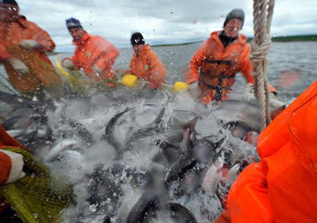 因中国港口关闭滨海边疆区的渔民向韩国和日本出口产品