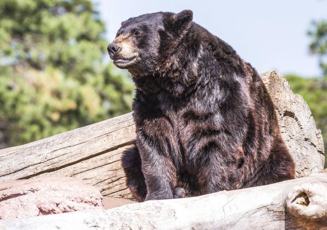 美国猎人差点被其枪杀的熊杀死