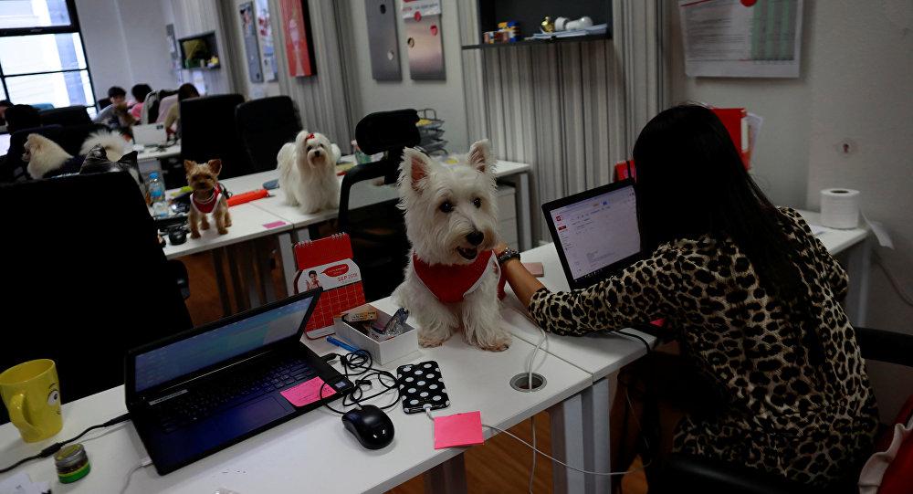 泰国广告公司员工带宠物狗上班