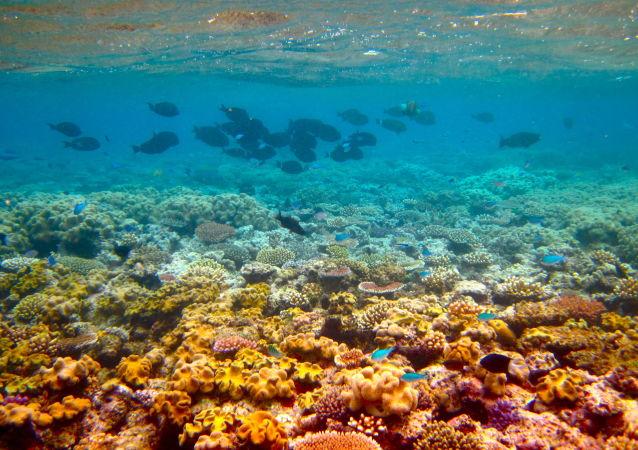 美国科研机构评估佛罗里达沿海珊瑚礁的生存状况