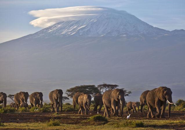 津巴布韦最大国家公园中的50多头大象死于饮食短缺