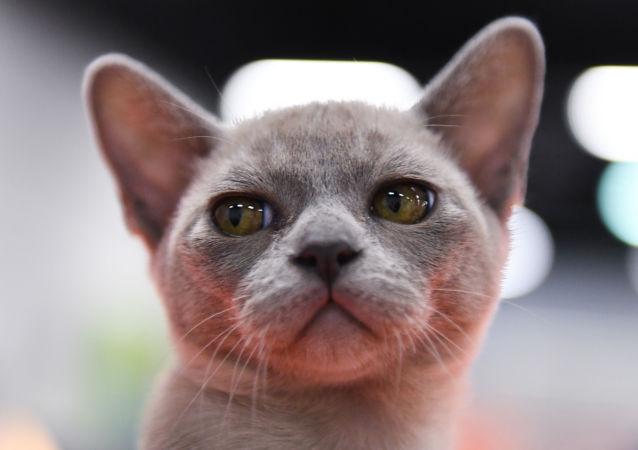 iPhone XR将具备拍摄猫狗像的功能
