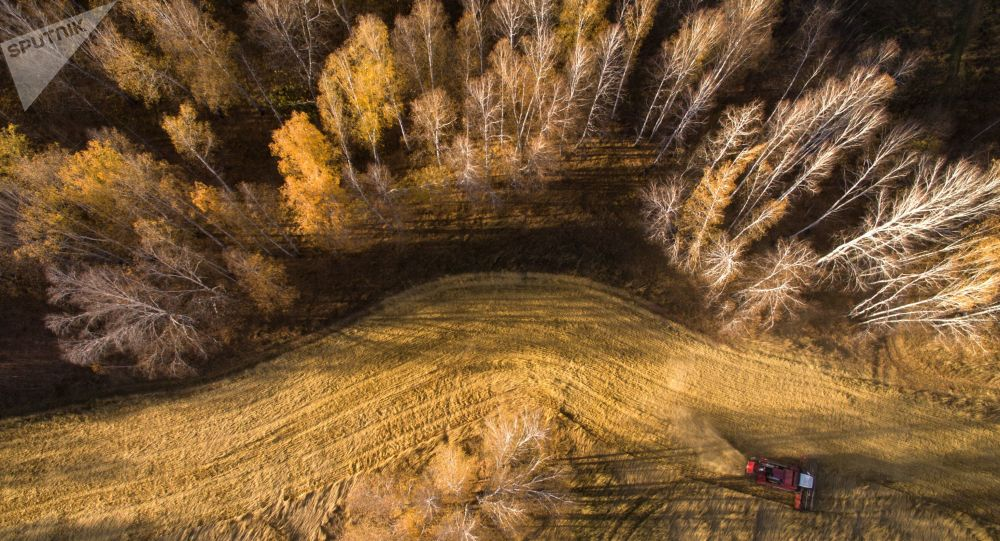 俄目前已收获1.236亿吨谷物 比上年同期增加6.9%