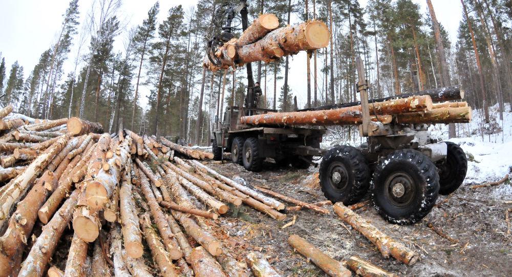 满洲里海关:1月份满洲里口岸木材进口量同比减少14.6%