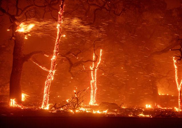 美国加州洛杉矶因森林火灾宣布疏散马里布市居民