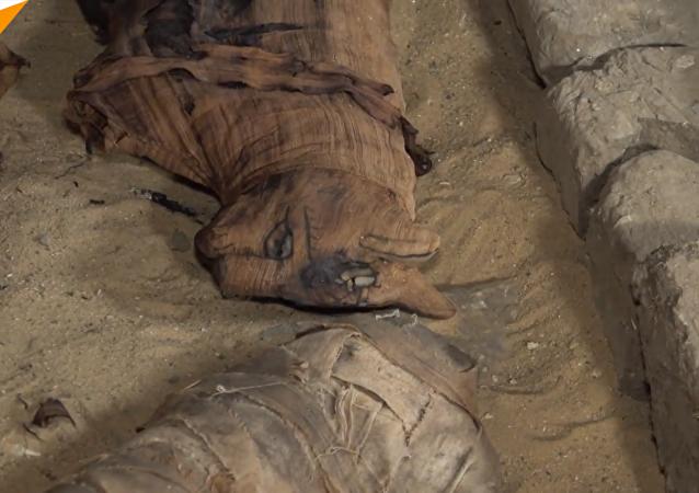 埃及发现7座古墓葬 大量动物木乃伊出土