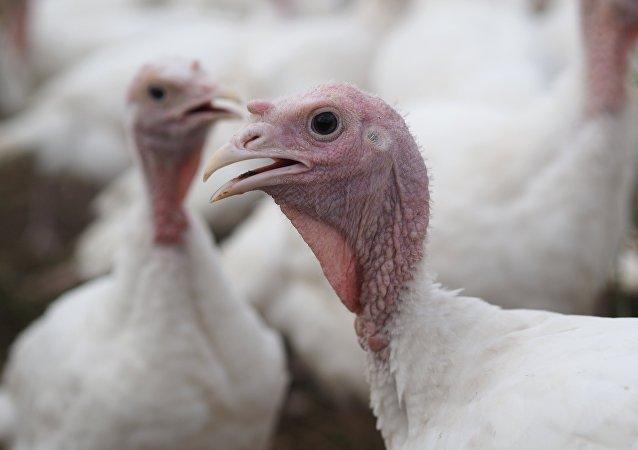 烹制火鸡视频中出现令人惊奇的视错觉