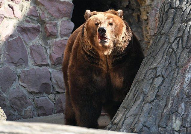 上海野生动物园游客目睹工作人员遇熊袭击死亡