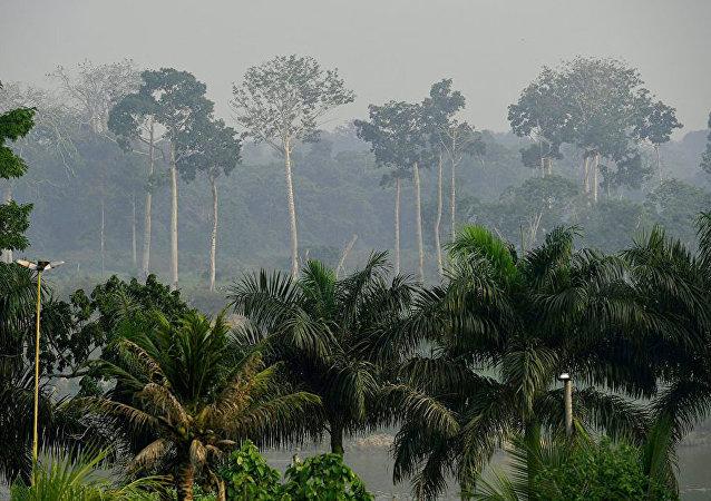 研究:热带雨林正在迅速失去吸碳能力
