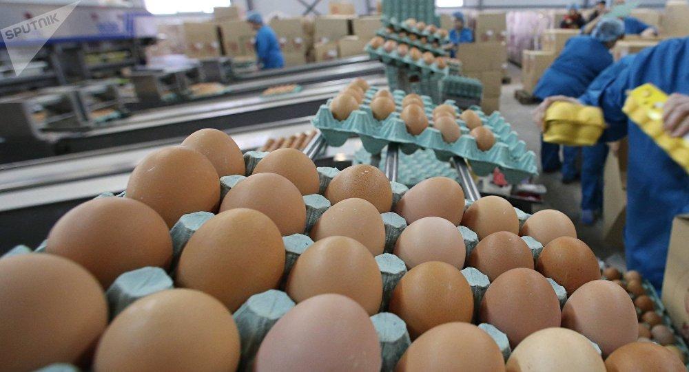 深色蛋壳鸡蛋