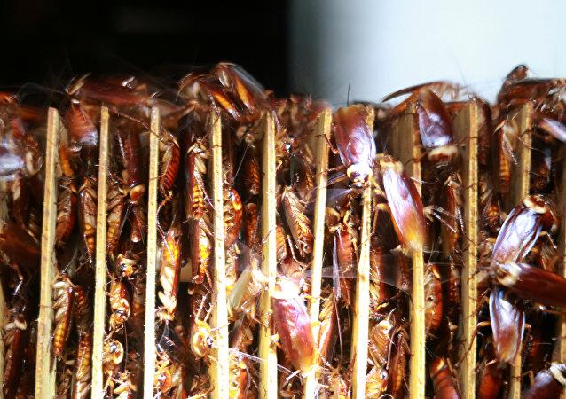 联合国专家介绍吃昆虫有什么好处