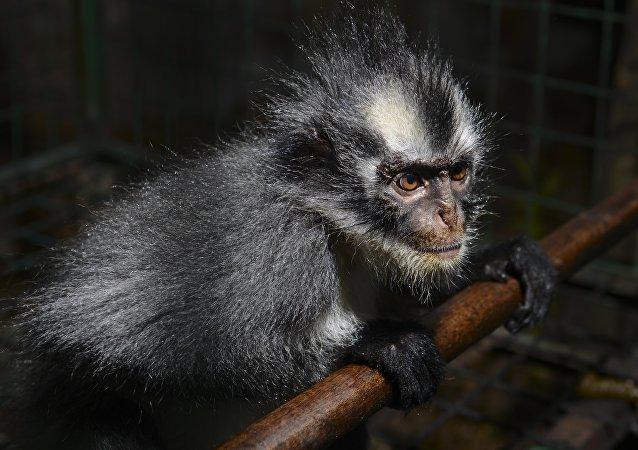 新西伯利亚动物园展示狨猴吃什么和如何吃
