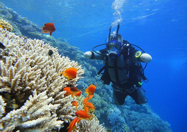 帕夫连科在红海练习下潜
