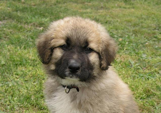 塞尔维亚总统将赠送普京一条狗