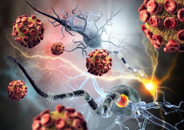 癌细胞和神经细胞