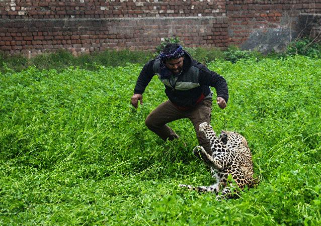 愤怒的豹子袭击众人