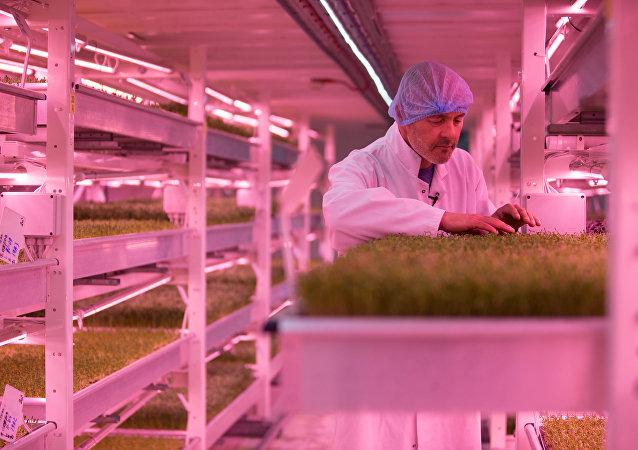 伦敦隧道内的世界首家地下旅游农场即将开放