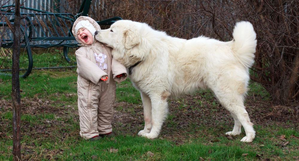 专家:孩子7岁前不宜养狗