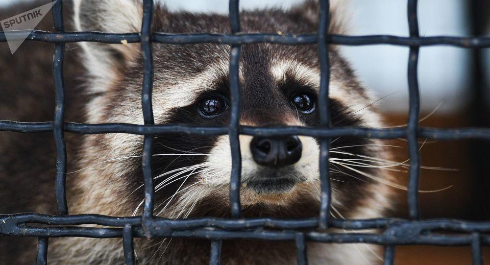 俄罗斯将制定动物园动物饲养新标准