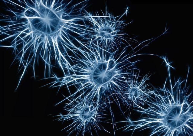 德国研究人员发现神经元活跃情况可反映决策信心
