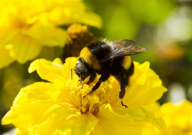 黄蜂将帮助无人机穿过缝隙