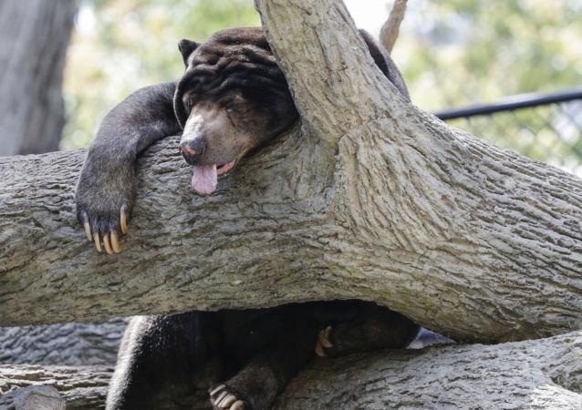 女友建议助男子击退暴怒母熊