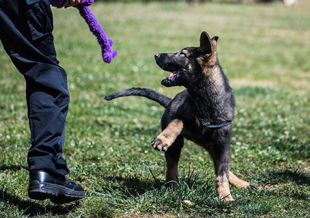 中国首只克隆警犬
