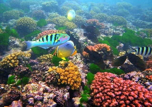 鱼粘液细菌将成新抗生素来源