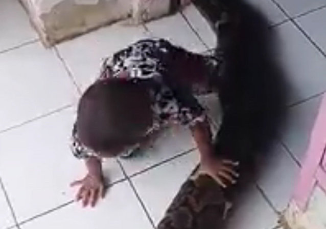 男孩与致命蟒蛇嬉玩