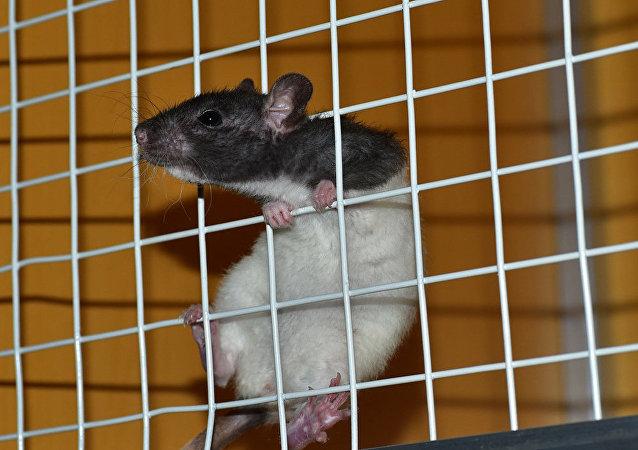 Мышь в клетке