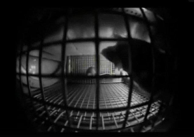 视频拍摄小鼠在国际空间站的异常行为
