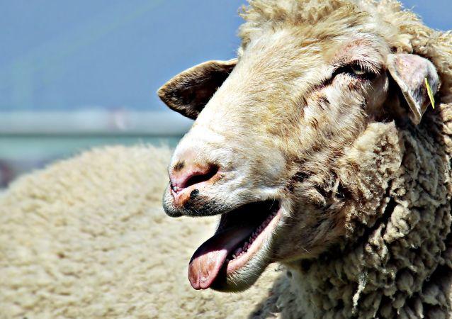 中国海关总署:禁止直接或间接从葡萄牙输入羊及其相关产品