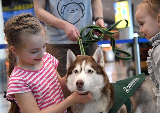 姑娘抱着狗狗