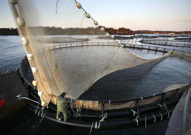 鲑鱼养殖场