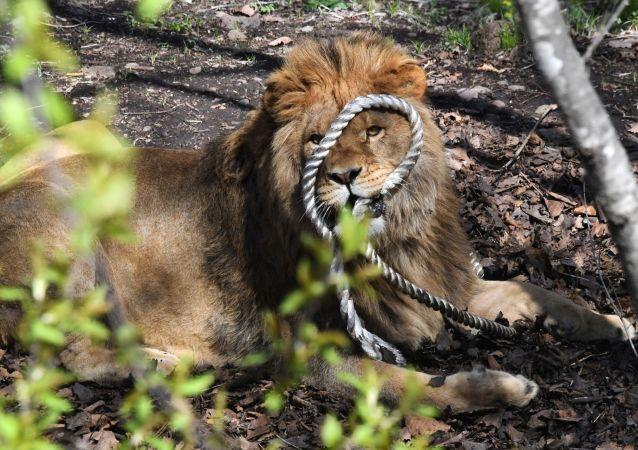 巴基斯坦一老板放狮子攻击讨薪电工