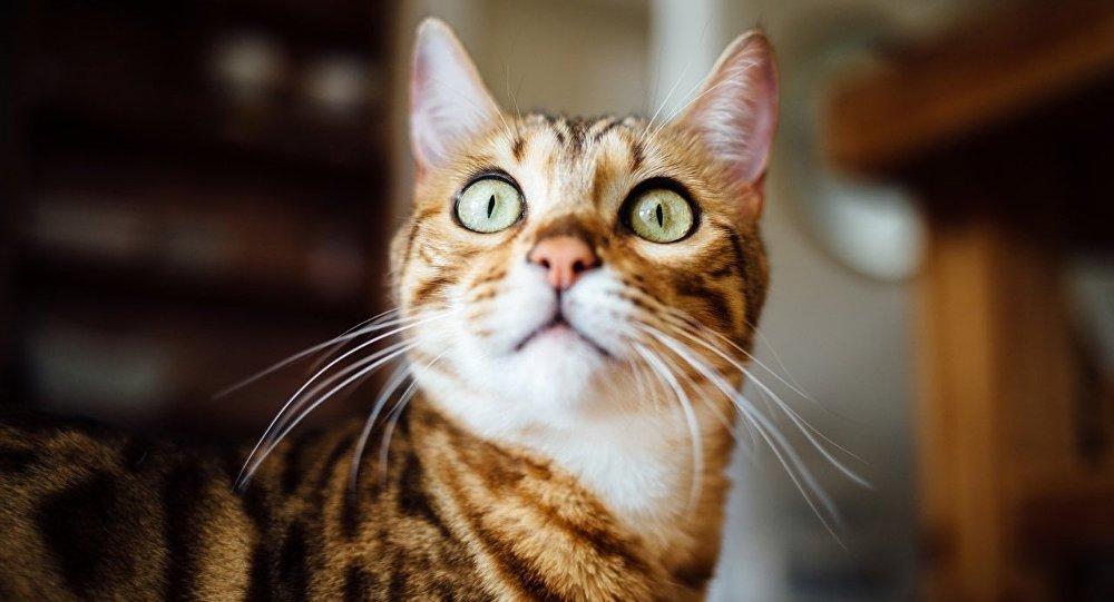 一名莫斯科男子把猫扔出窗外以报复姑娘