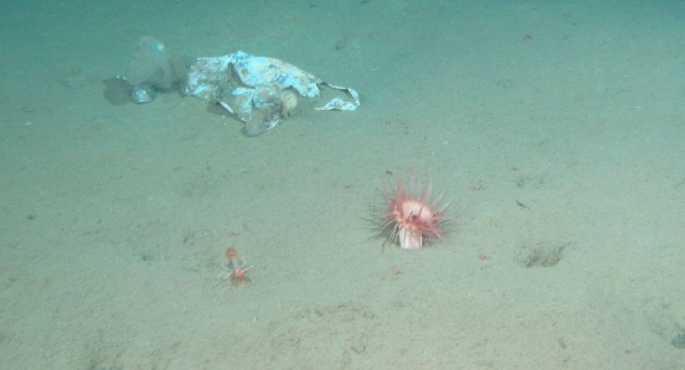 美国探险队在马里亚纳海沟底部有了惊人发现